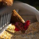 Mueren más de 10.000 aves en un incendio en una explotación de pollos en Ourense